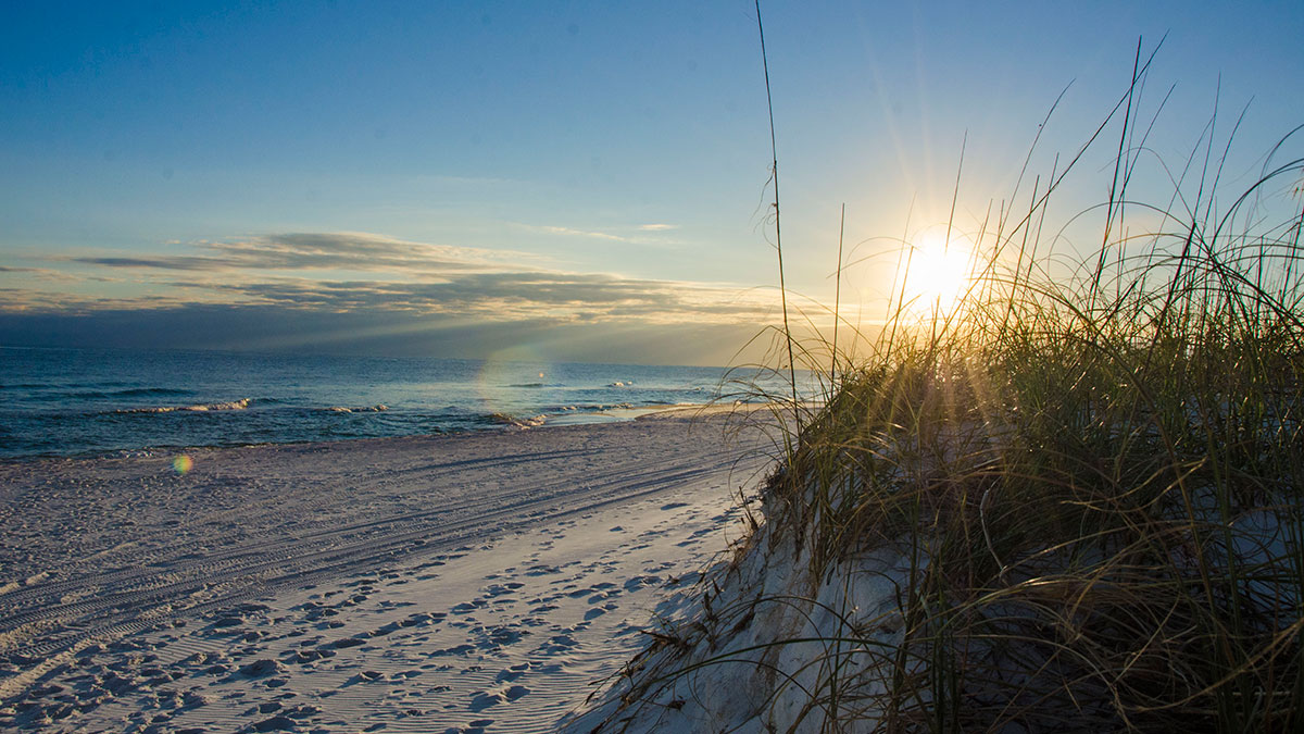 Pensacola Beach Natural Dunes