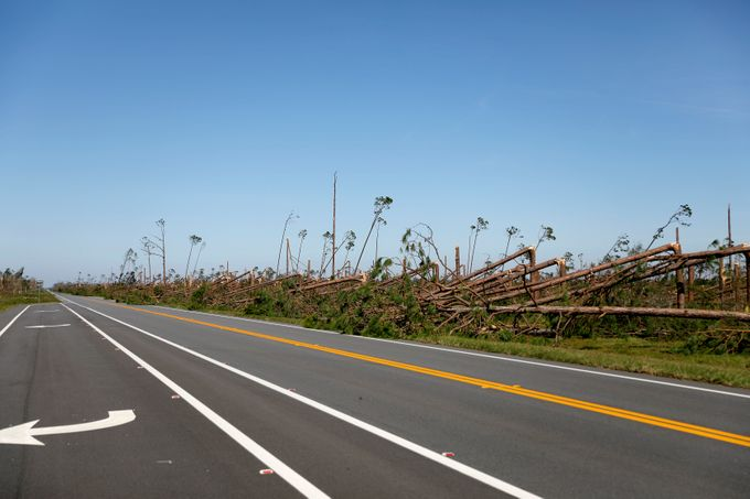 Trees damaged by Hurricane Michael near Tyndall AFB