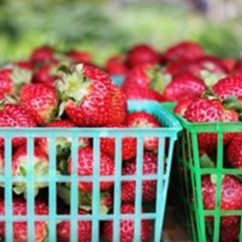 Fresh Strawberries at Orlando Farmers Market