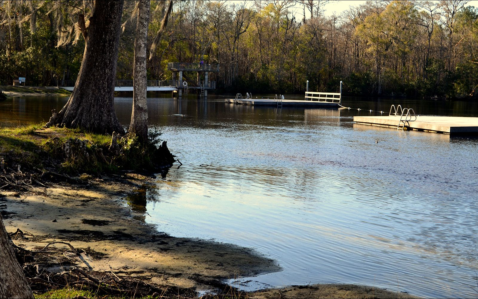Scenery from Edward Ball Wakulla Springs State Park