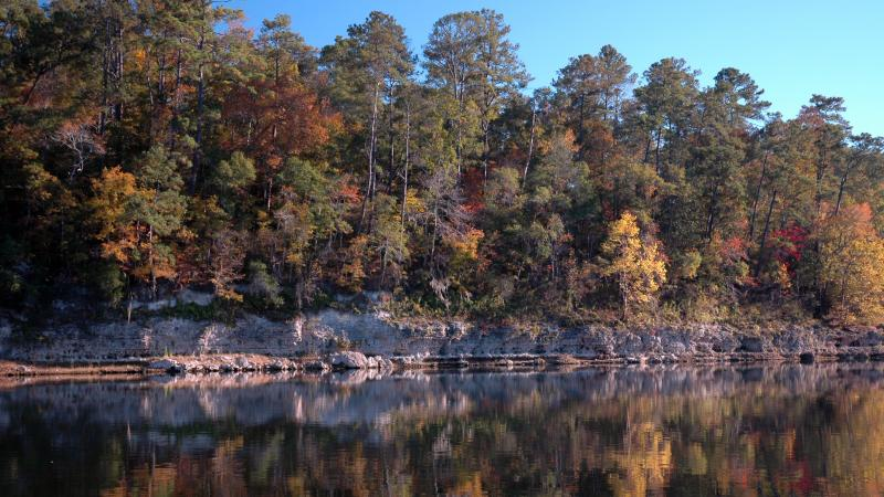 Fall foliage growing out of limestone bluff on the Apalachicola River.
