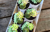 Edible Vegan Succulent Pots from Valhalla Bakery