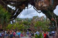 Disney Animal Kingdom Pandora