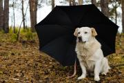 Take your pets with you - hurricane preparation