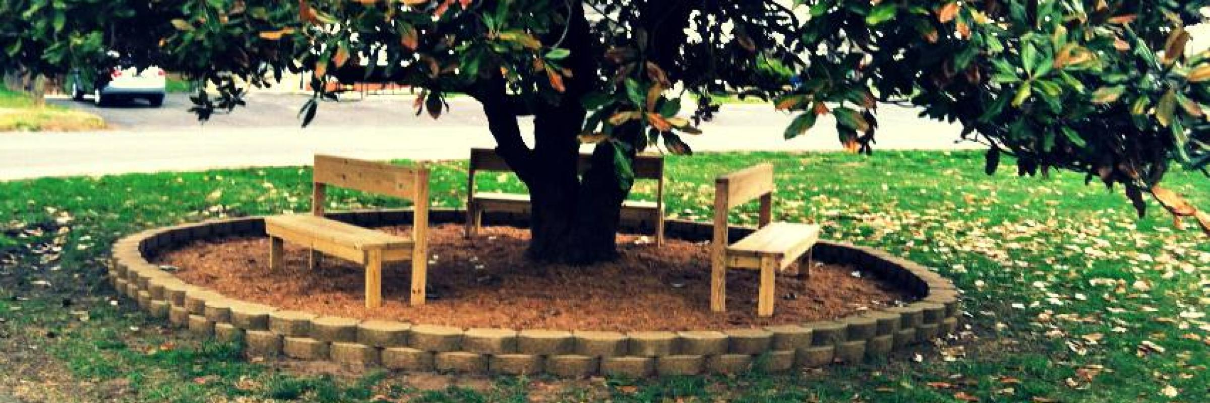Park Benches Around a Tree