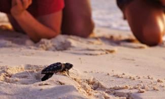 Sea Turtle Nesting Season in Florida
