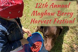 Mayhaw Berry Harvest Festival