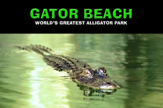 Gator Beach in Destin Florida