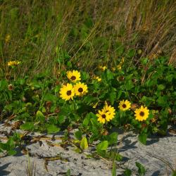 10 Native Florida Flowers for Your Garden